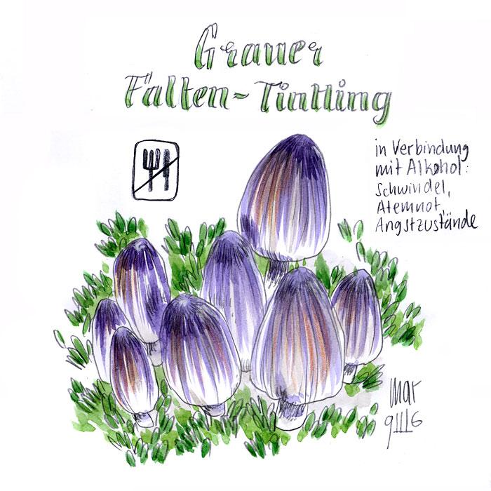 Grauer Falten-Tintling