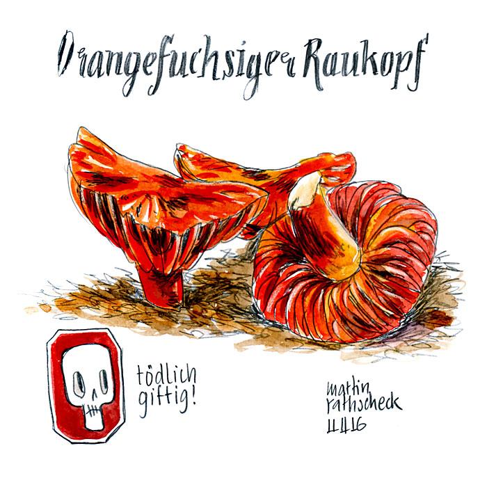 Orangefuchsiger Raukopf
