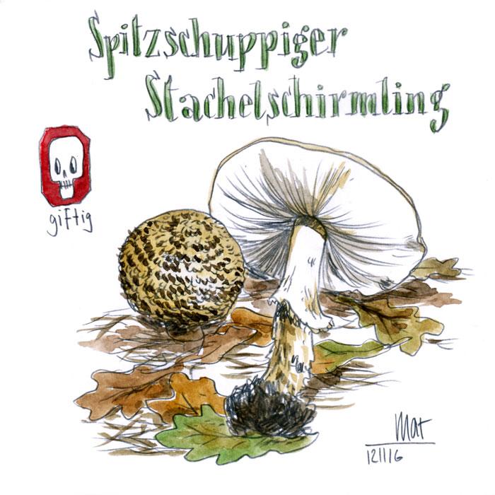 Spitzschuppiger Stachelschirmling